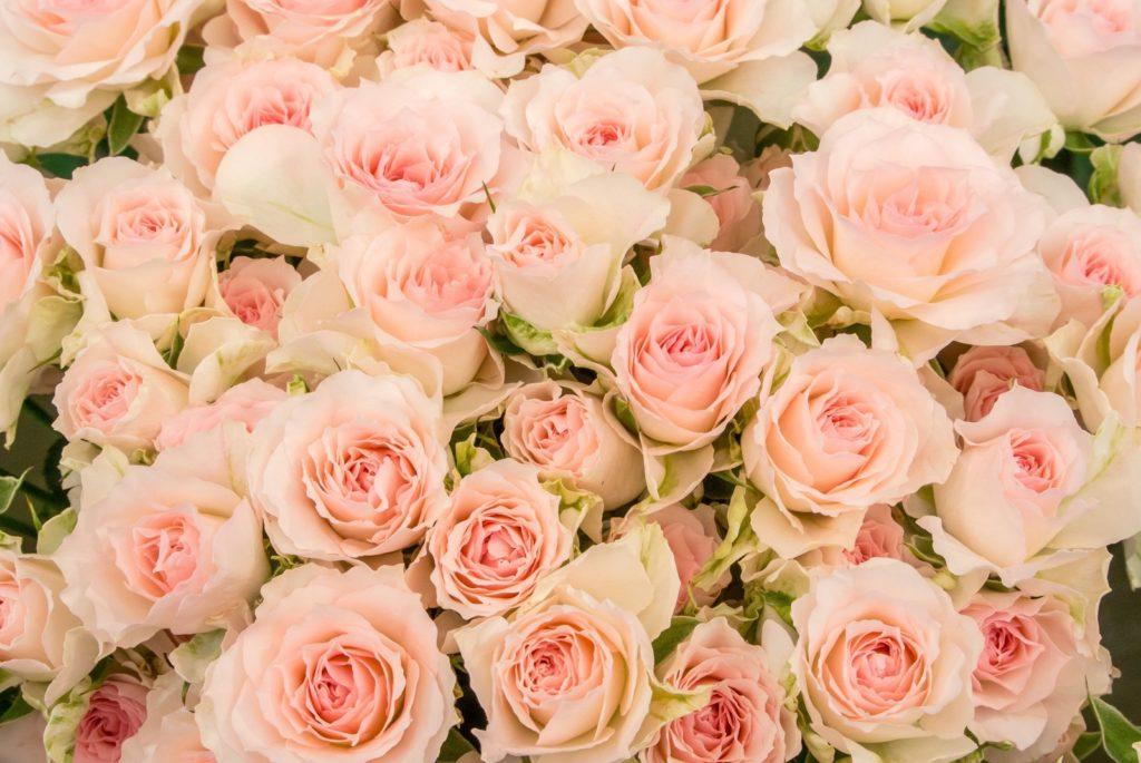 ハワイ語でLoke=薔薇の花